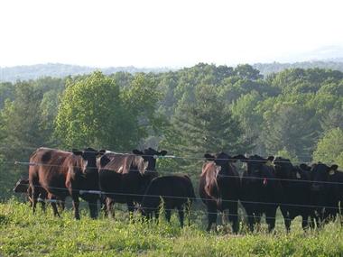 Longlesson Farm